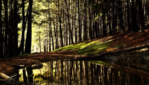 forest-river-reflection-mikewilson