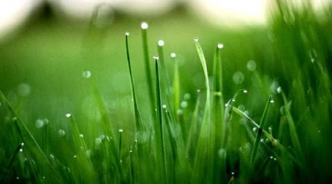 grass-macro-drops-grzegorzmleczev