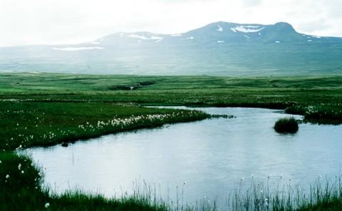 lake and grasslands