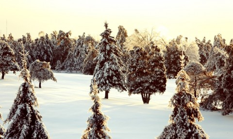 quebec-snow-nature
